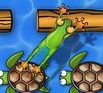 צפרדע מגשר